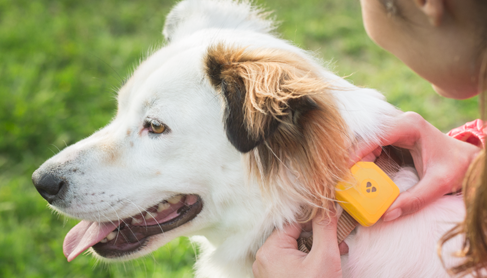 get-findster-gps-dog-tracki
