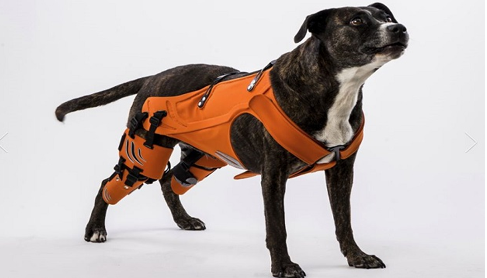 hipster-harness-for-dogs-pe