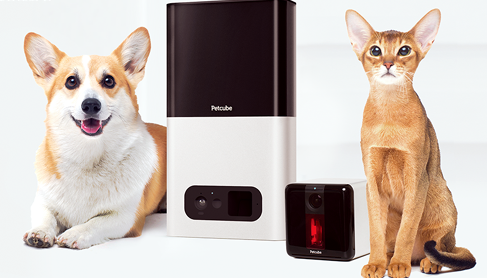 petcube-smart-connected-pet