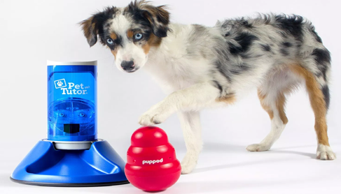 puppod-connected-dog-game